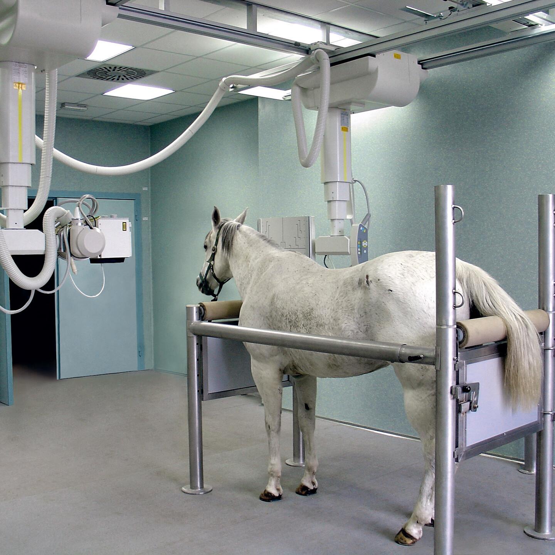 Tiere röntgen